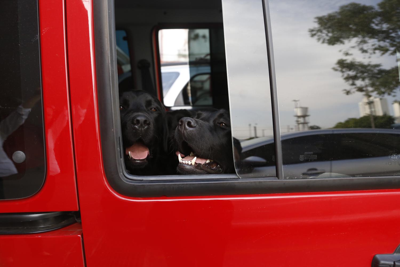 Dois labradores pretos, simpaticões, na janela de um bumba