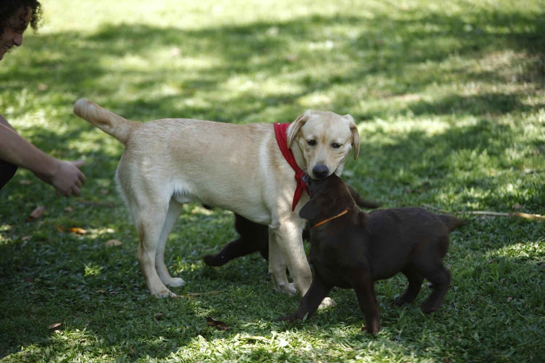 Dois cães jovens brincando em um gramado
